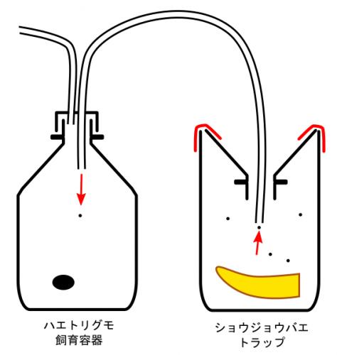 siiku-youki_160630
